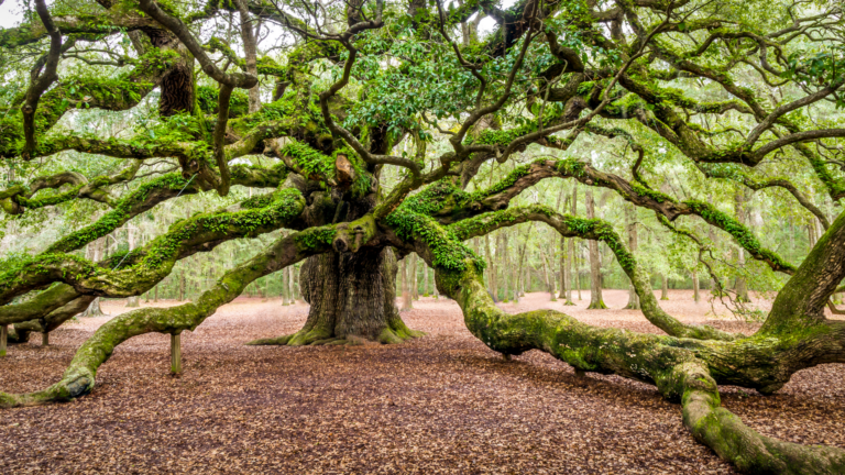 Finding Beautiful Places for Smiling Faces - Find My Porch Real Estate - Angel Oak on Johns Island, SC - Robin Windham - Find My Porch Real Estate